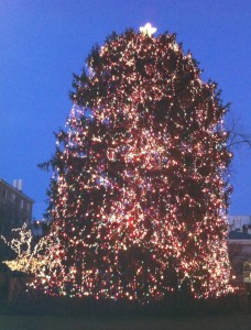 Live decorated Christmas tree at Palmer Square in Princeton, NJ, USA.