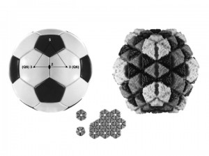 Comparison of the symmetry elements of a virus particle (right) with the seam structure of a soccer ball.