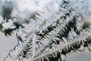Fig.3. Ice crystals on a window pane formed overnight on a cold winter night, following slight scratches on the  window glass. (Author private colllection. Do not reproduce without permission).